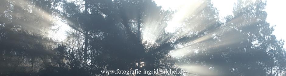 Sonnenstrahlen scheinen durch einen Baum