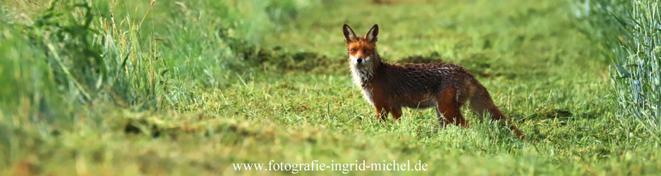 nasser Fuchs