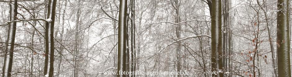 Winterbuchenwald am Hohen Lohr